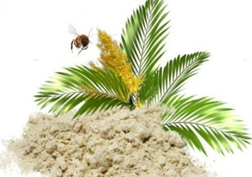 Пальмовая пыльца - польза и применение